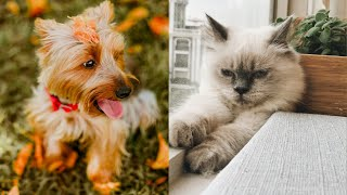 Aww animals video| cute dogs and cats most funny moments of the beautiful baby animals 2020 #61