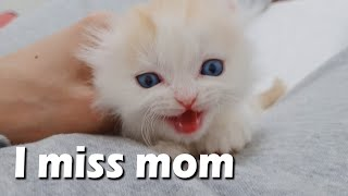 The Cry of My Kitten who Misses his Mom