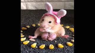 Funny and Cute Hamster Compilation  Funniest Hamsters FULL Time 2020