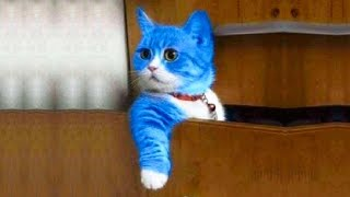 OMG So Cute Cats ♥ Best Funny Cat Videos 2020 #23