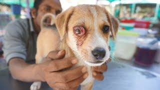 Sweetest puppy with extremely painful infected eye rescued.
