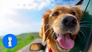 Top 10 Cutest Dogs In The World!