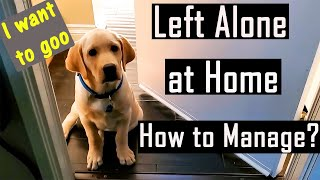 We Left our Puppy Alone at Home for 2 Hours | Tips on How to Leave a Dog Alone (Cute Video)