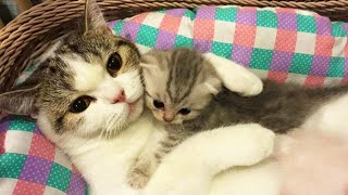OMG So Cute Cats ♥ Best Funny Cat Videos 2020 #27