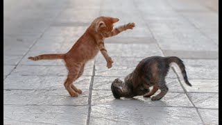 Cats and Kittens playing, Cute Kittens, Cute Cats
