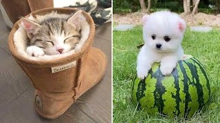 Baby Animals 🔴 Funny Cats and Dogs Videos Compilation (2020) Perros y Gatos Recopilación #61
