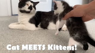Baby kittens MEET their Cat DAD for First Time! – Funny Reaction!😹