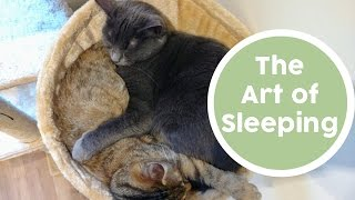 The Art of Sleeping. Funny and cute cats. Cats sleeping. Cat and kitten