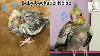 Baby Cockatiel Sound like baby dinosaurs / Happy Baby Cockatiel Noise and Sounds