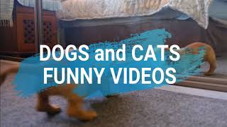 NEW CUTE DOGS AND CATS COMPILATION||CAT LOVERS||DOG LOVERS||MFOUR SISTERS