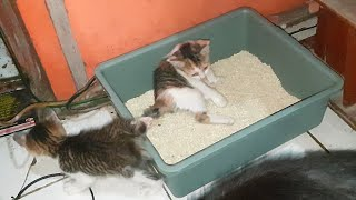 Cute Cats Thinks The Toilet is a Bed