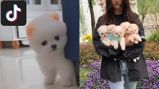 TikTok Pets: Funny and Cute Dogs Video Compilation 2020