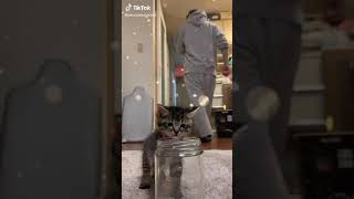 Cats are so funny PART 1100 FUNNY CAT VIDEOS TIK TOK
