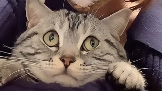 THE BEST FUNNY CAT VIDEOS OF THE WEEK 😸SO CUTE CATS | YUFUS