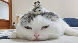 OMG So Cute Cats ♥ Best Funny Cat Videos 2020 #57