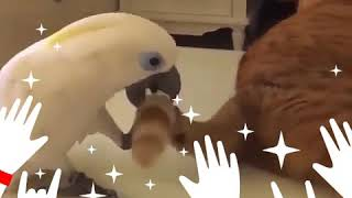 Cute and funny birds 😍💕