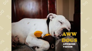Aww Dogs Soo Cute! 🐶🐶🐶 Funny And Cute Dogs Video Compilation 2020 #27