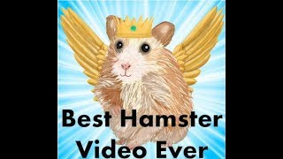 Cutest Hamster Video – Best & Funny Hamsters Ever