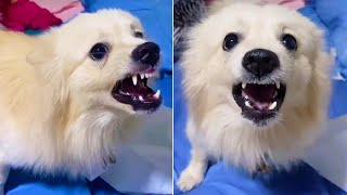 Baby Dogs – Funniest & Cutest puppies 2020