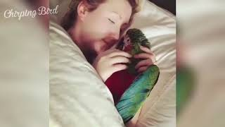 Cute and Funny Birds Compilation #2