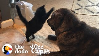 "Tiny Blind Kitten Grows Up ""Attacking"" His Huge Dog Brother 