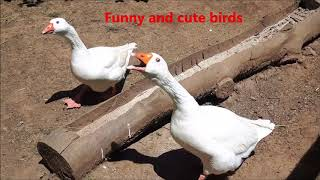 Funny and cute birds