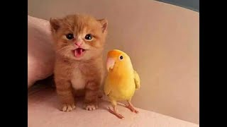 CAT and BIRD – PLAYFUL CAT and BIRD – FRIEND CAT and BIRD – FUNNY PARROTS and CATS COMPILATION