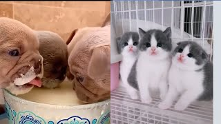 🐕🐈Cute Cats and Cute Dogs Videos Compilation #5 | Funny Animals Funny