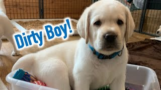 PUPPY's FIRST BATH! Lab Puppy Zeus in the big boy tub – SO Adorable!