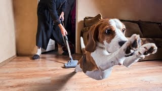 Funny Dogs Afraid Of Vacuums – HILARIOUS Animal Video Compilation [NEW HD]