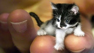 Aww Super Cute ♥ Best Funny Cats and Dogs Compilation #82
