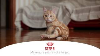 Five Ways to Prepare for Your New Kitten