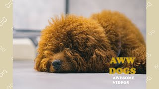 Aww Dogs Soo Cute! 🐶🐶🐶 Funny And Cute Dogs Video Compilation 2020 #33