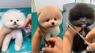 💗Aww – Cute Baby Dog Grooming   Lovely Puppies Haircut
