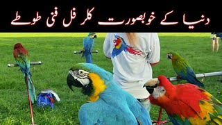 Beautiful colorful parrots of the world Funny birds Parrot