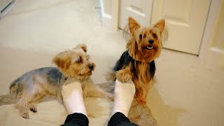 Cute Dogs, Foot Rubs, and Dog Scratches other Dog #FootDogs