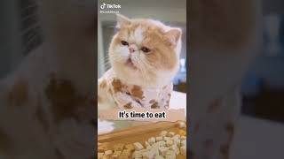 Cats are so funny PART 1235 FUNNY CAT VIDEOS TIK TOK