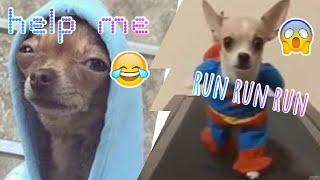 Cute and funny dog photos