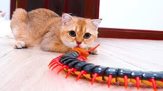 Clash Between Cute Cats And Super Huge Centipede | Paw Paw