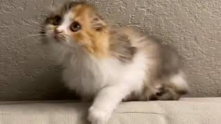RIP my furniture | Cute Cats Cute Kittens Video