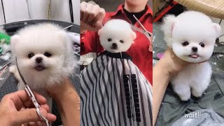 #cute puppies hair cutting video #shorts #puppies #dogs