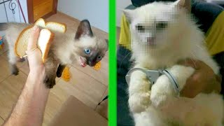 BEST CAT MEMES COMPILATION OF 2020 PART 33 (FUNNY CATS)