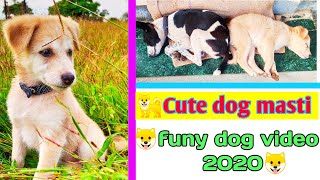 #short cute dog videos | cute dogs and puppies doing funny things | #dogs |cute dog whatsapp status