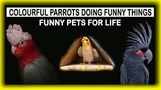 Funny Birds | Funny Speaking Birds | Funny Pets for life | BR Boss Vlogs