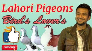 #birdslovers #birdslover's #PIGEONS Are Such#FunnyBirds Cute #FunnyPigeonVideo CompilationNew