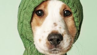 Funny Cute Animals Dogs compilation – having fun compilation