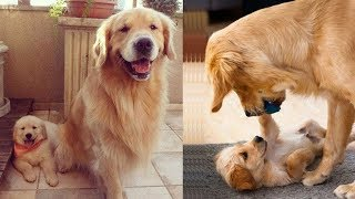 Mother Dog and Cute Puppies – beautiful, happy and meaningful moment of animal family – kiki tv 4