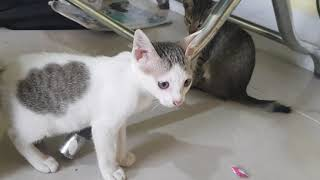 Most cute cats , Funny cats compilation 01