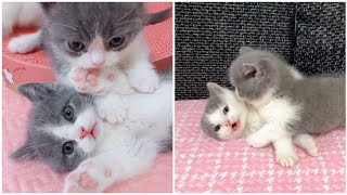 Cute cats, Cute and funny cat videos, short video