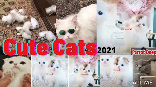 Cute Cats in the world 2021  Models Cats   Lovely Cats   Funny Cats   Parrot Deep  